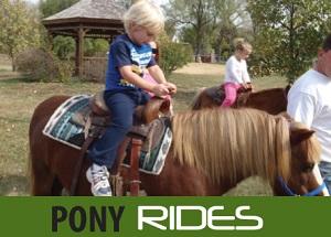 Pony-Rides web