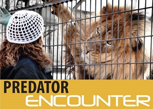 Predator-Encounter web