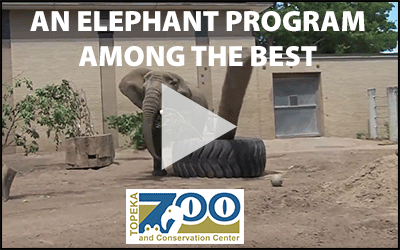 elephant-video-graphic