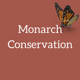 monarch-conservation