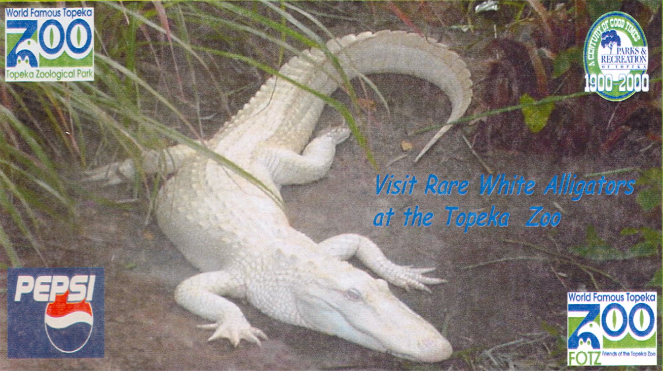 Rare white alligators visited in the summer of 2000.