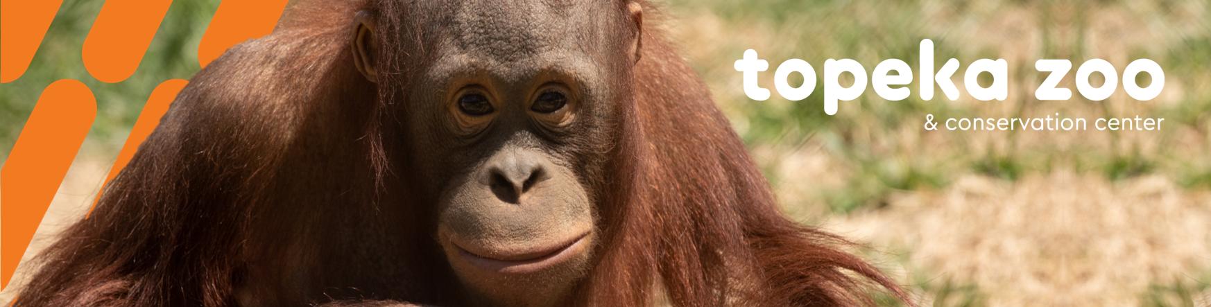 Orangutan Header