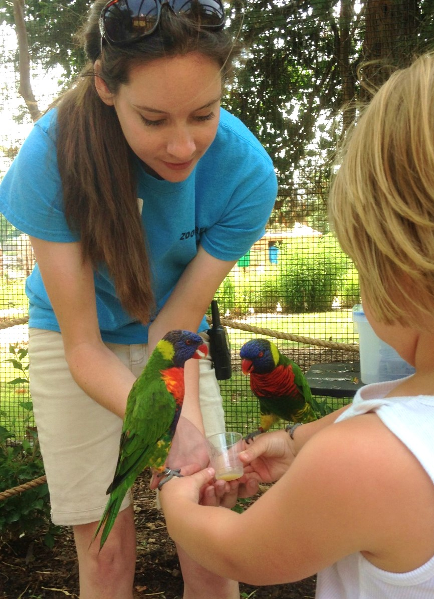 Adventure Trails featuring Lorikeet feedings opened in 2015.