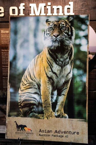 Serengeti-MeganBurns-2018_19