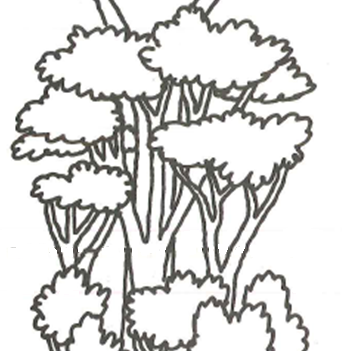 sketch of trees with branches and leaves