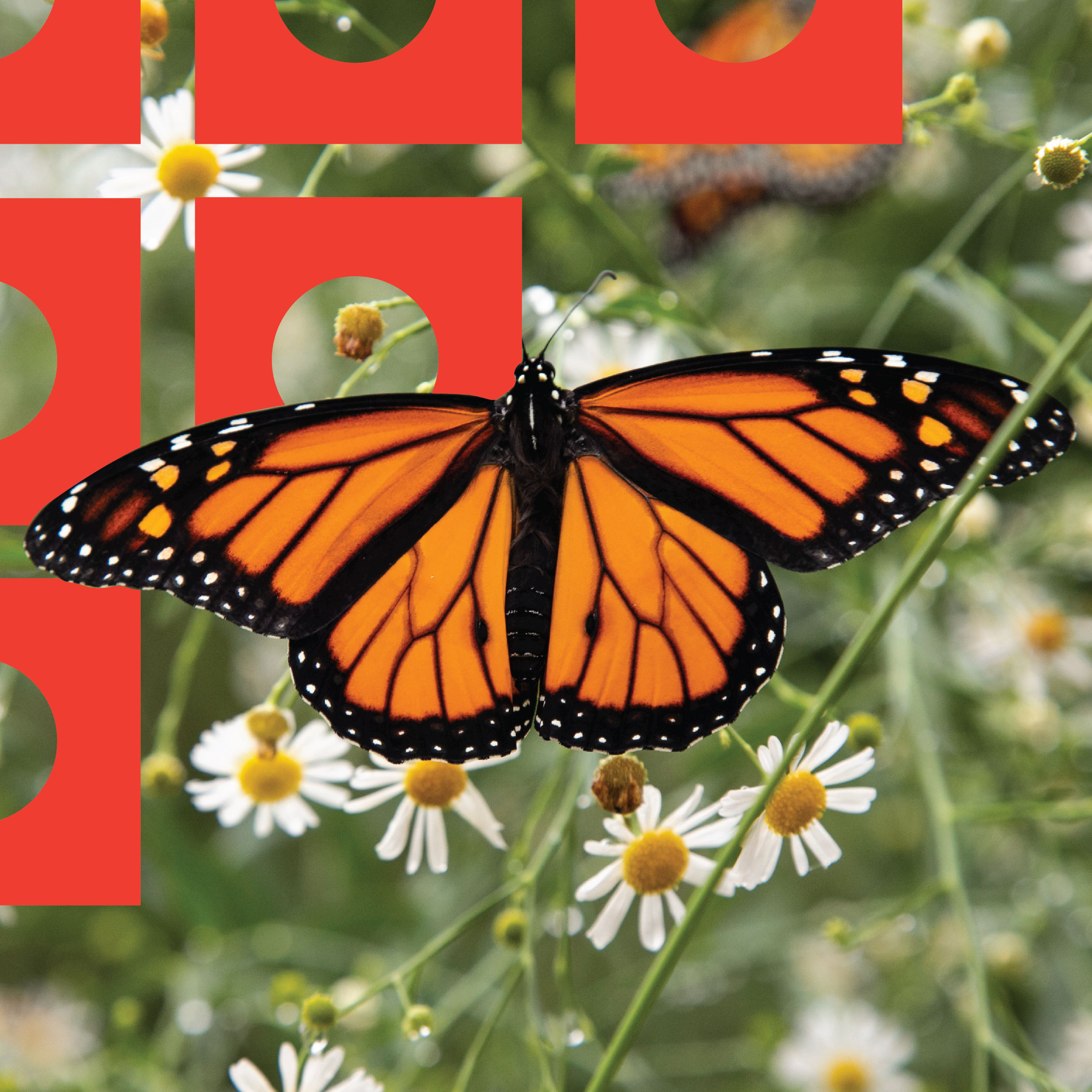 Monarch Butterfly Education Classes at the Topeka Zoo