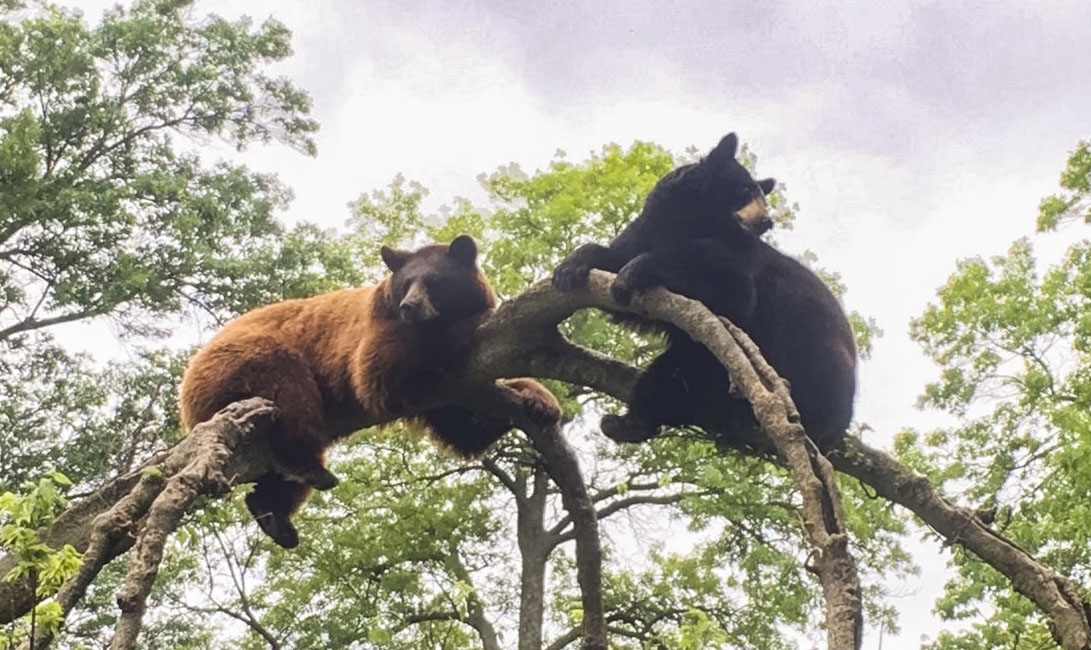 Val and Indie on a tree branch