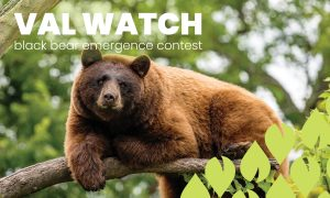 Advertising Image for Val Watch competition campaign