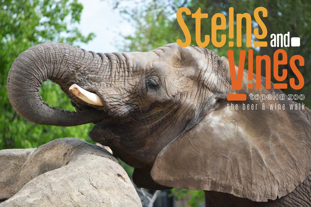 Steins and Vines - Elephant