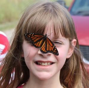 butterfly-1-2